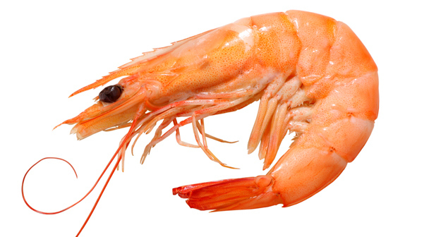Facts about shrimps for Fishing with live shrimp