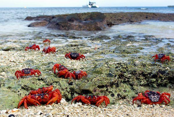 Where do crabs live