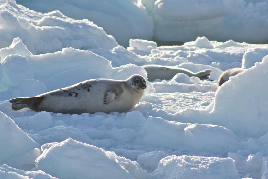 What Do Jaguars Eat >> Where do leopard seals live
