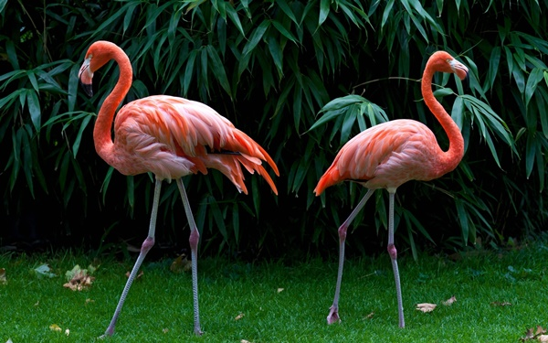 Scientific Name Of Flamingo Is Phoenicopterus Flamingos Are Colorful Birds That Live In South America And Africa Also The Warmer