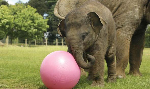 Where do asian elephants live - Image elephant ...