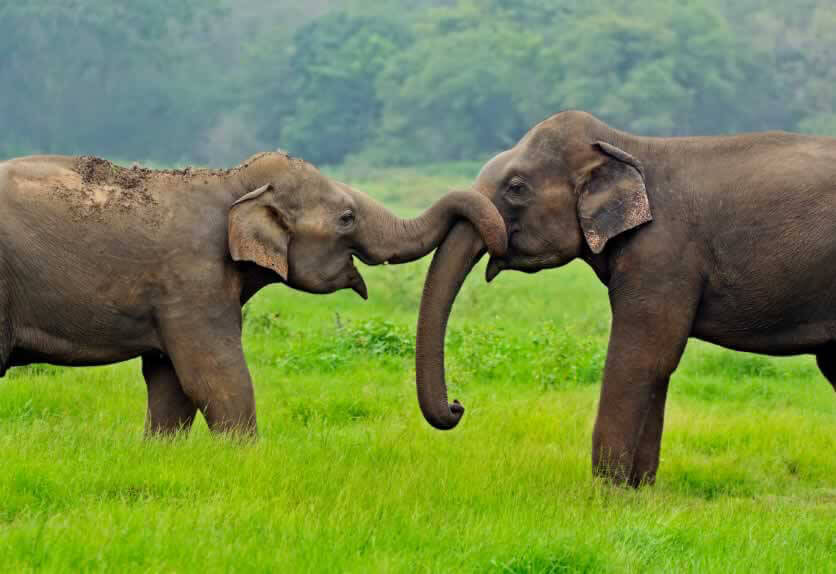 What Do Elephants Symbolize