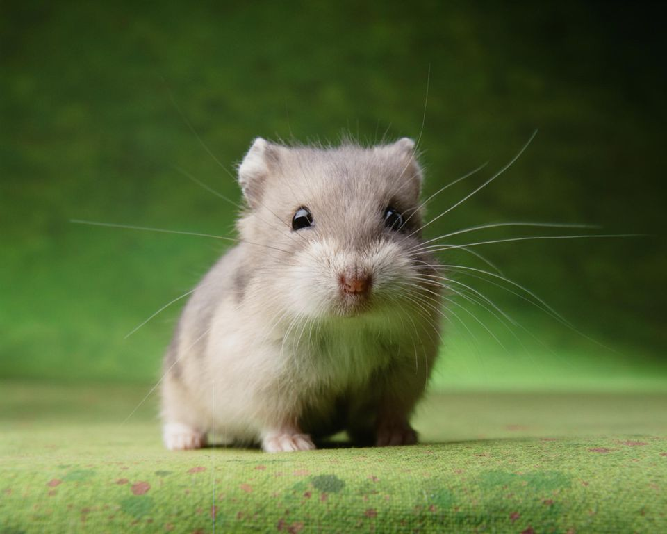 Hamster  Wikipedia