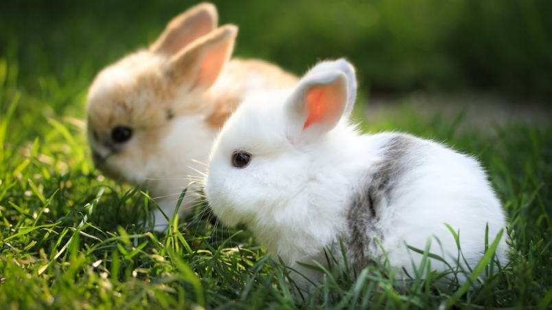 When Do Baby Rabbits Open Their Eyes