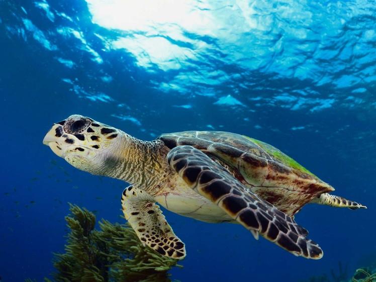 What do sea turtles eat