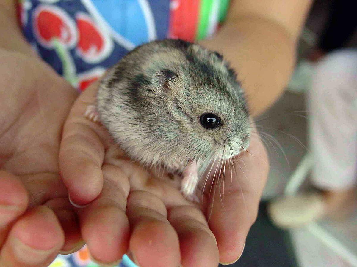 Www.hamster
